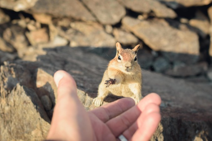 Photography squirrel contact handshake