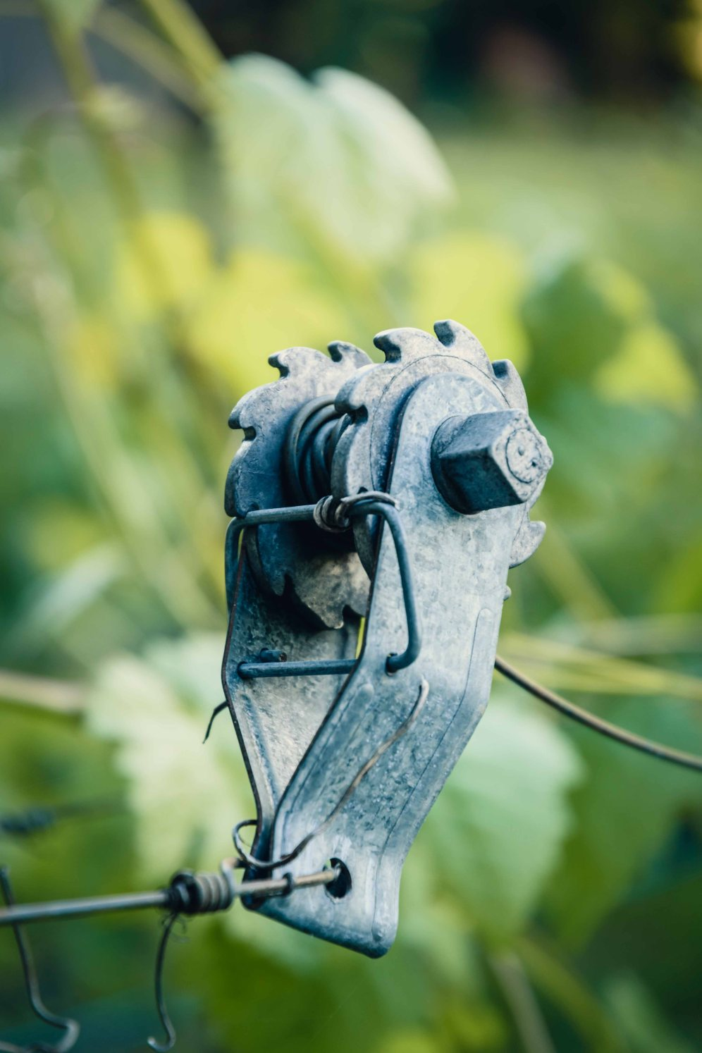 details country vineyard outdoor nature photography healdsburg