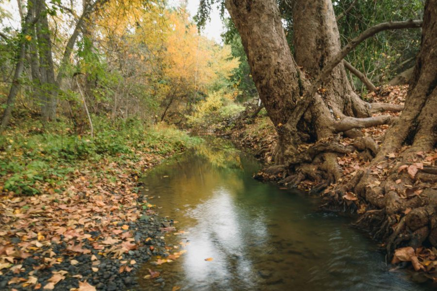 landscape photography mcclellan ranch cupertino rural country bay area creek trees