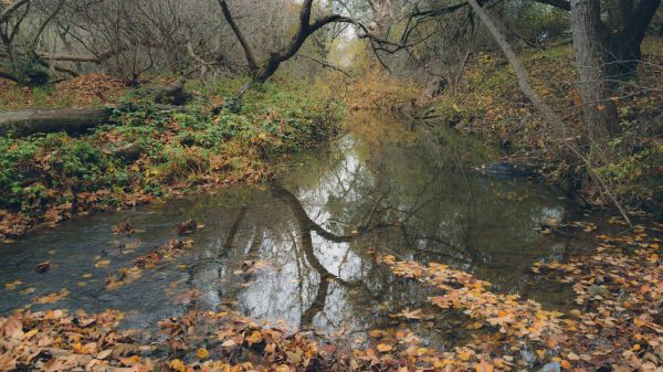 landscape photography mcclellan ranch cupertino rural country bay area creek moody trees