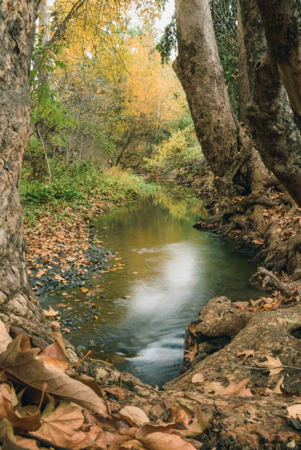 landscape photography mcclellan ranch cupertino rural country bay area creek crawdadding