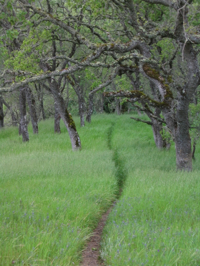 landscape bay area wilderness henry coe path