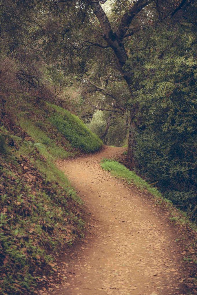 landscape bay area wilderness fremont older path