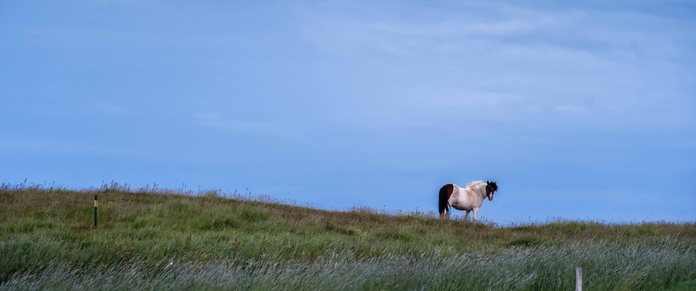 neilson travel photography landscape horse solitary