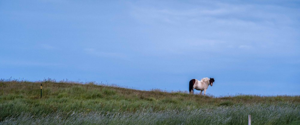 neilson travel photography landscape horse solitary