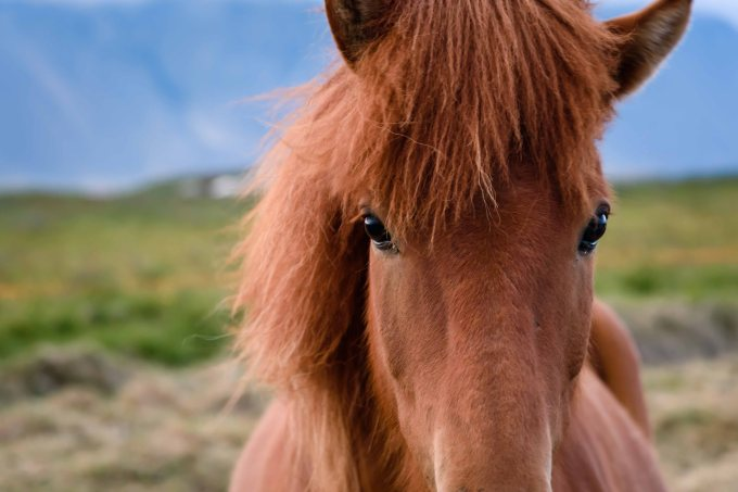 neilson travel landscape photography iceland horses mono e mono