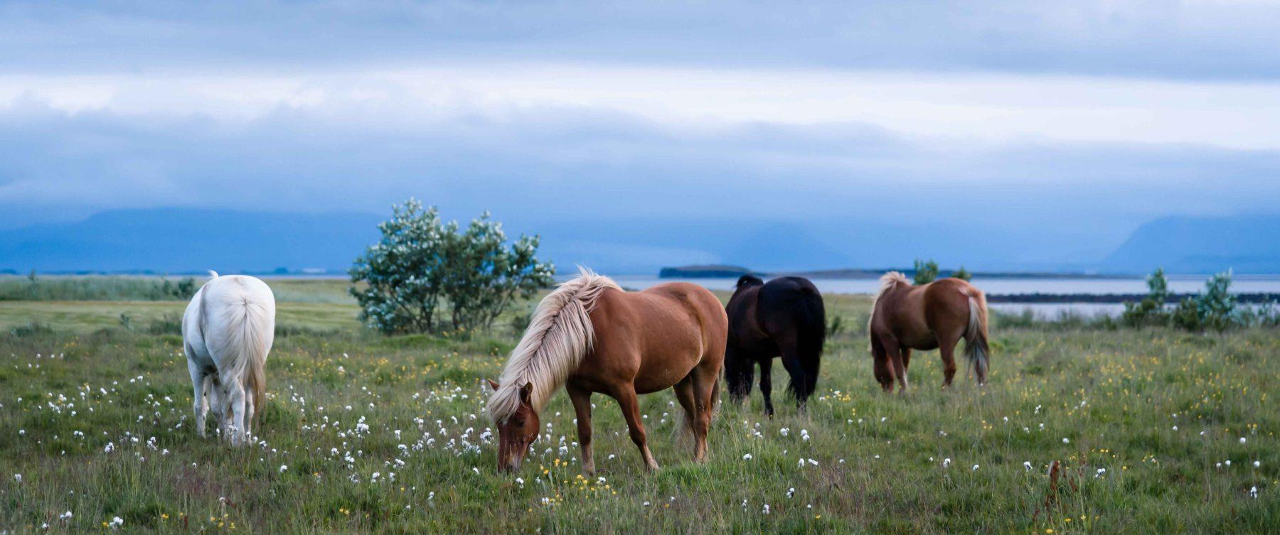 neilson travel photography landscape iceland horses cinematic group