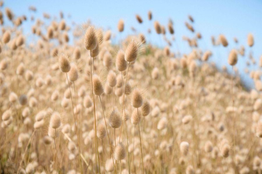 neilson landscape photography california bay area point reyes yellow grass blue sky