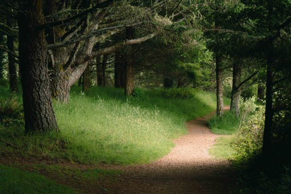 neilson landscape photography california bay area point reyes light on trail