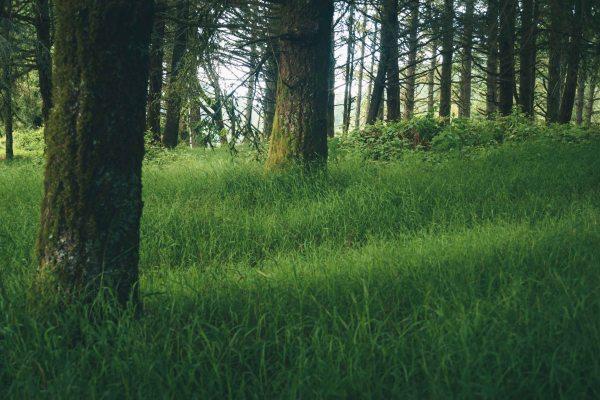 neilson landscape photography california bay area point reyes light on grass