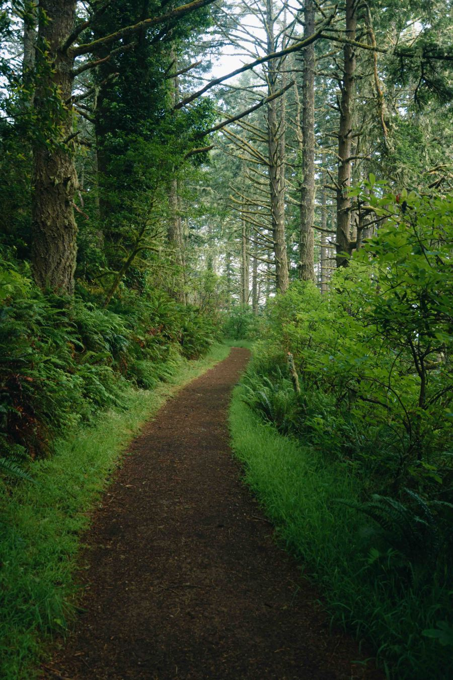 neilson landscape photography california bay area point reyes light on trail trees portrait