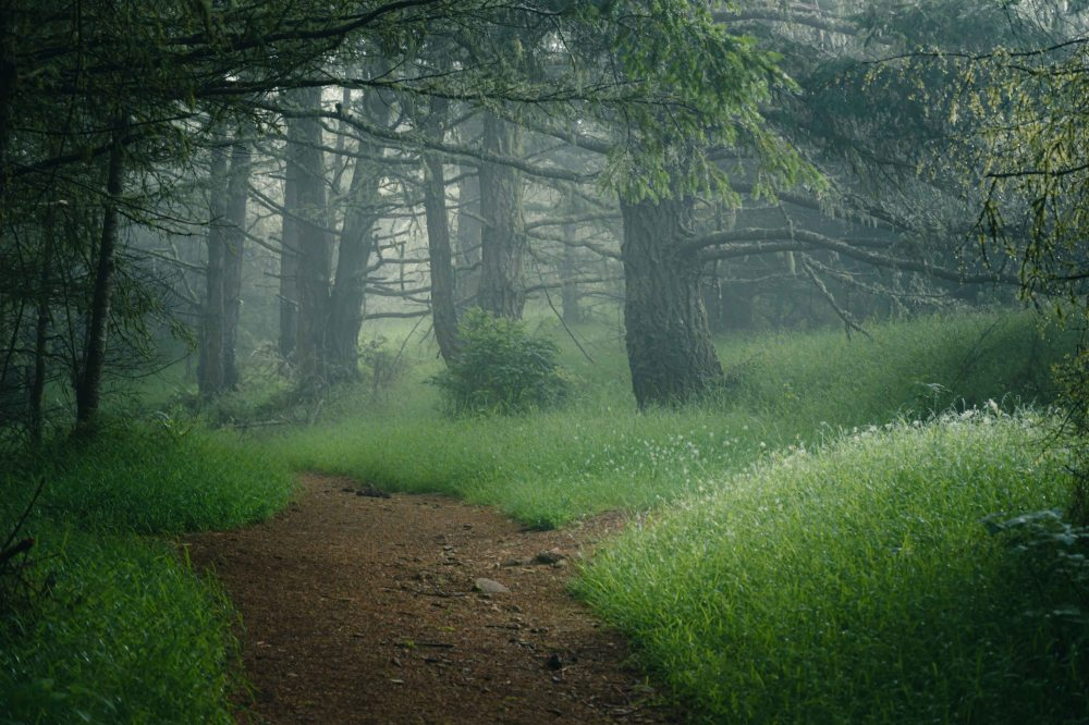 neilson landscape photography california bay area point reyes light on trail mist