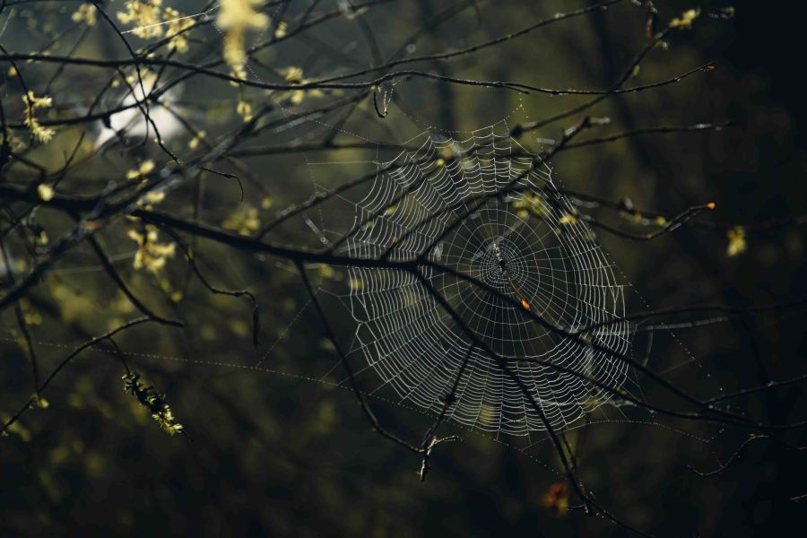 neilson landscape photography california bay area point reyes spider's web