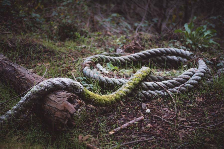 neilson travel photography bay area lahonda apple jacks old line rope like snake