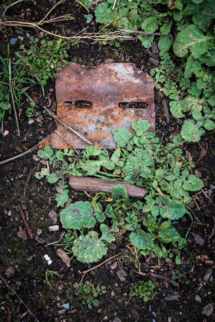 neilson photography bay area cupertino mcclellan ranch preserve found face wilson