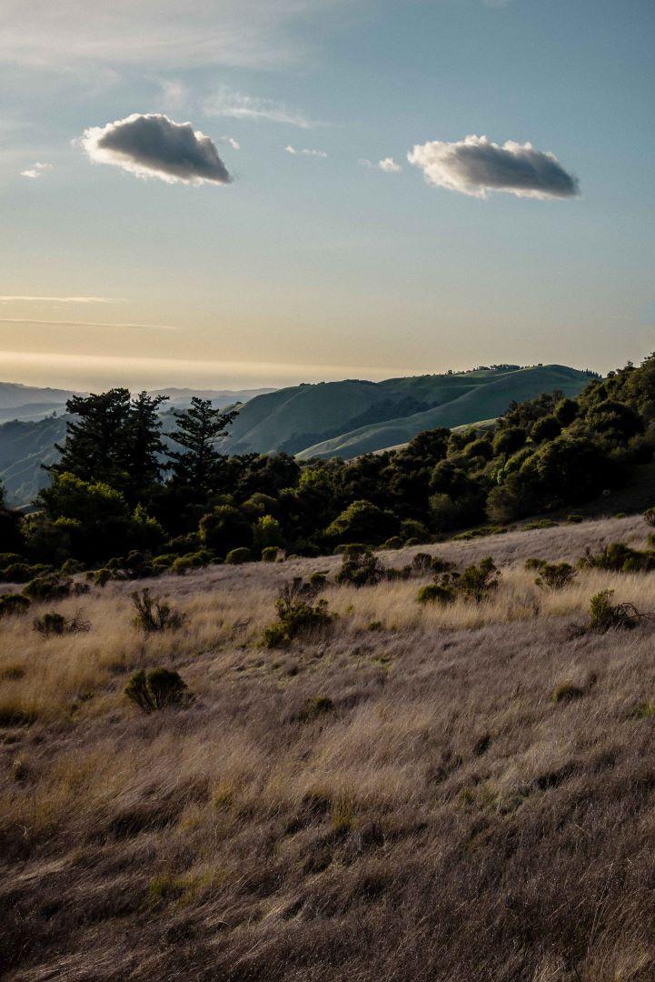 neilson photography bay area palo alto russian ridge found face