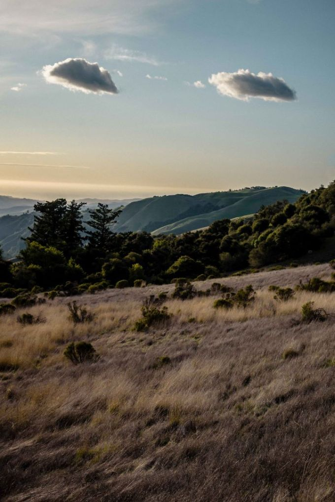 neilson photography bay area palo alto russian ridge found face