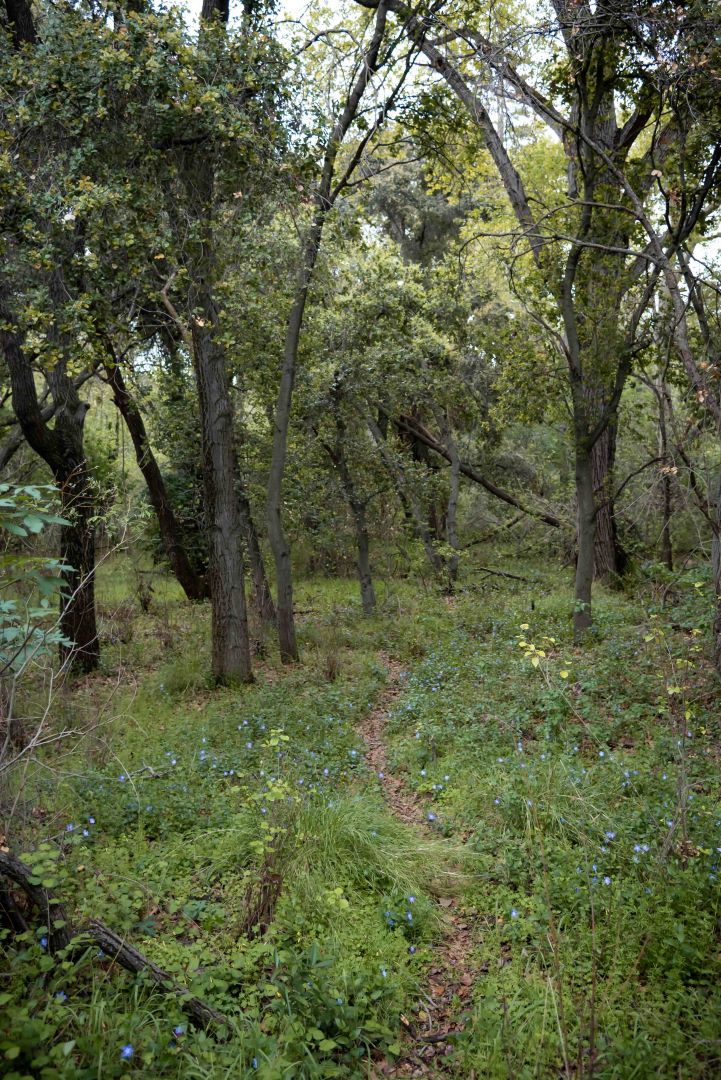 neilson photography bay area cupertino mcclellan ranch preserve game trail