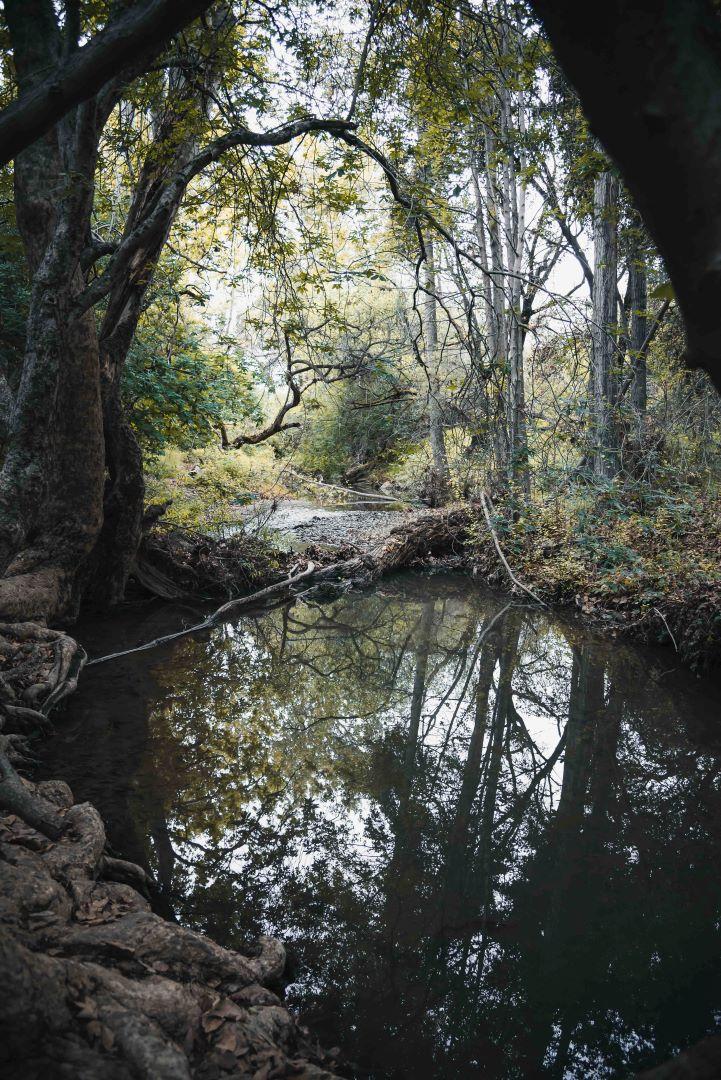 neilson photography bay area cupertino mcclellan ranch preserve wood creek dark deep