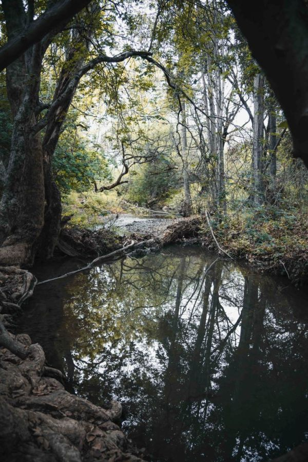 neilson photography bay area cupertino mcclellan ranch preserve wood creek dark deep