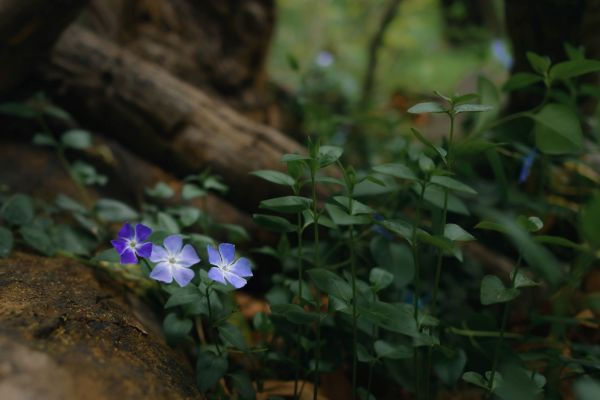 neilson photography bay area cupertino mccellan ranch preserve periwinkle wood