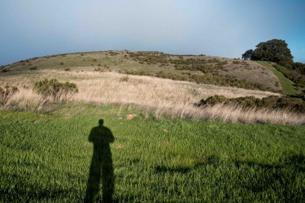neilson photography bay area palo alto russian ridge shadow grass tree