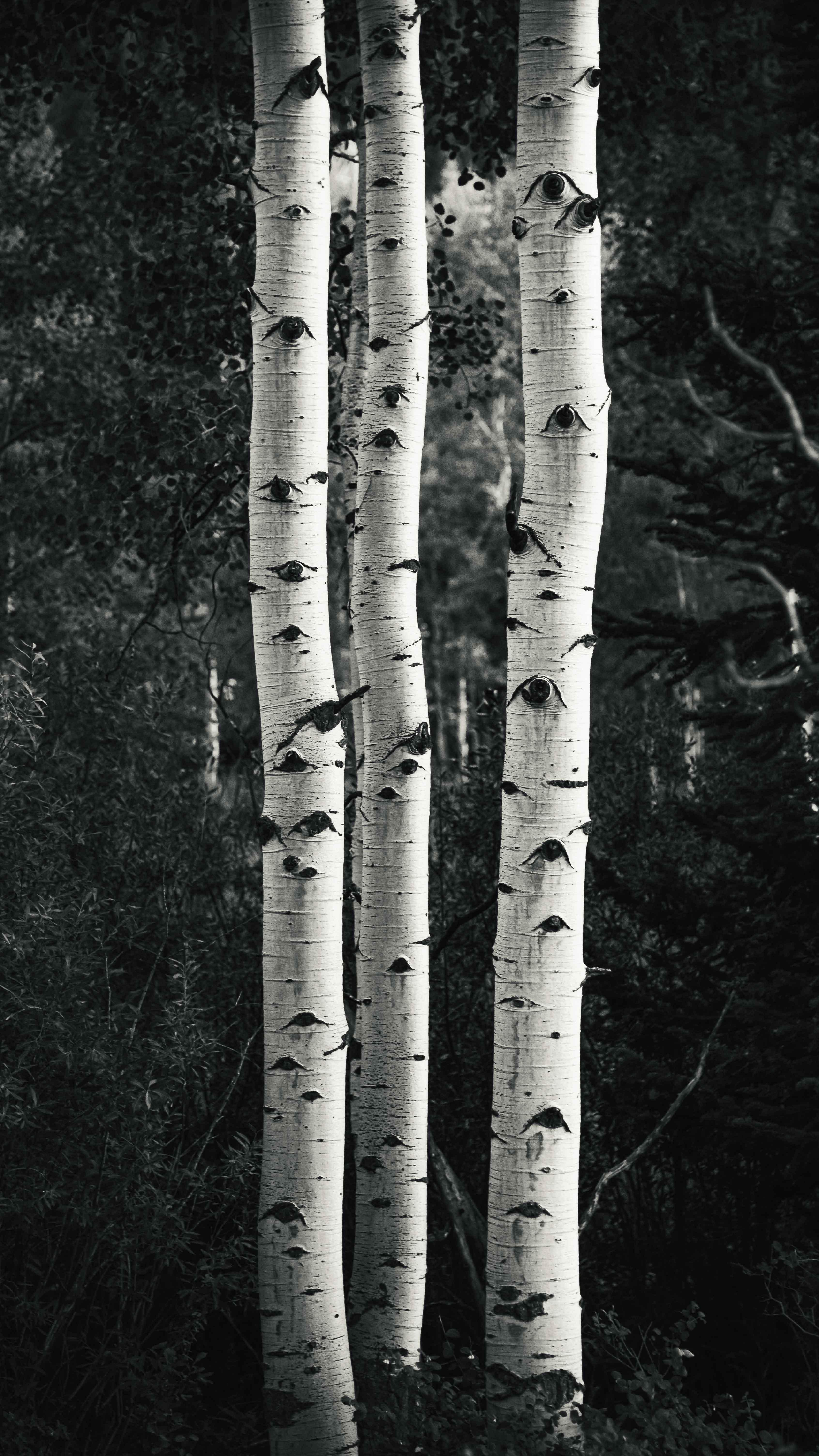 neilson landscape travel photography utah aspen black and white