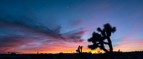 joshua tree twilight sky clouds landscape photography moon cinematic