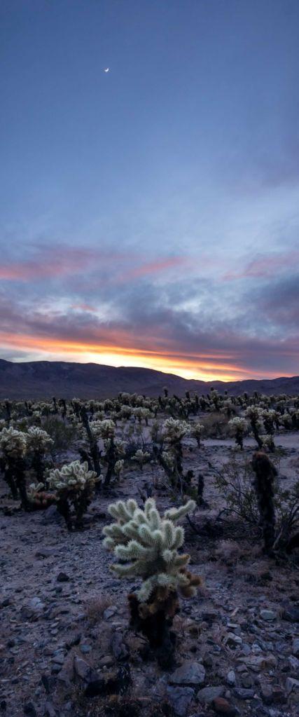 joshua tree twilight sky clouds cactus moon landscape photography