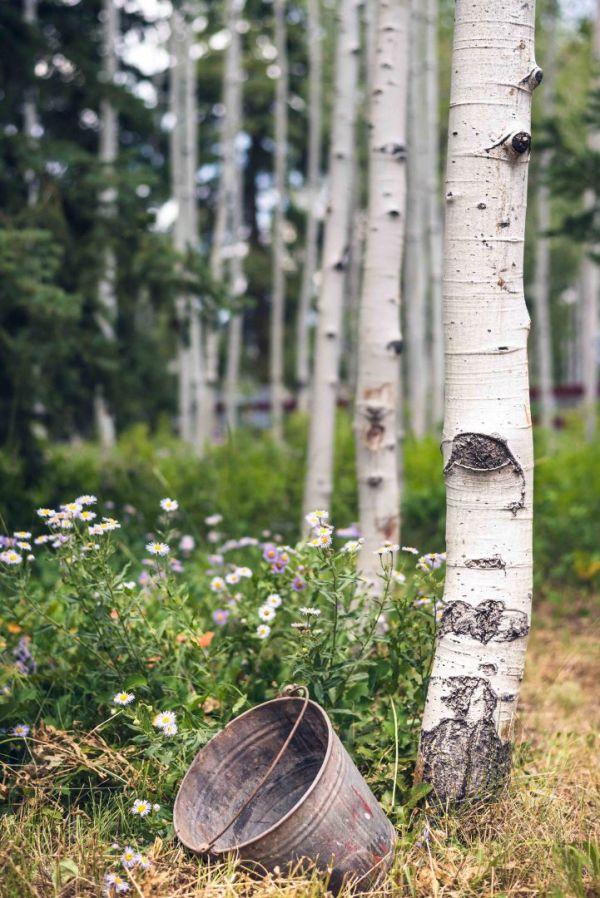 landscape photography utah wasatch mountains aspen water pail