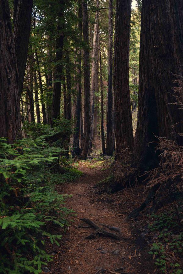 Neilson landscape photography california big sur hwy 1 limekiln state park redwoods